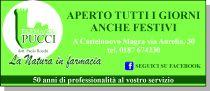 Farmacia Pucci del Dr. Paolo Rocchi